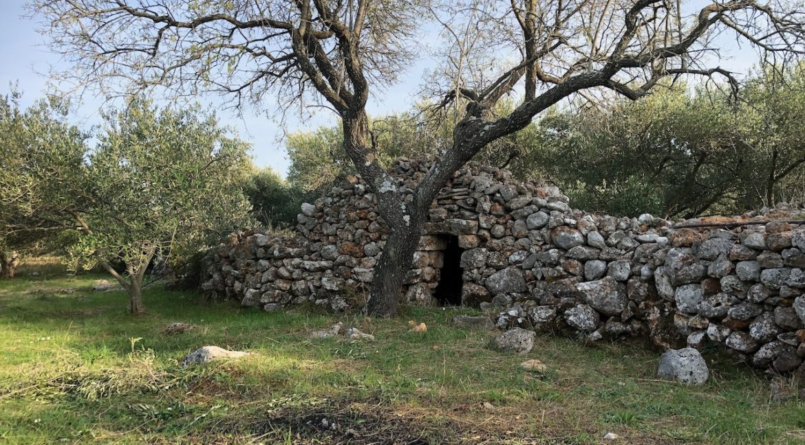 Land with olive trees for sale